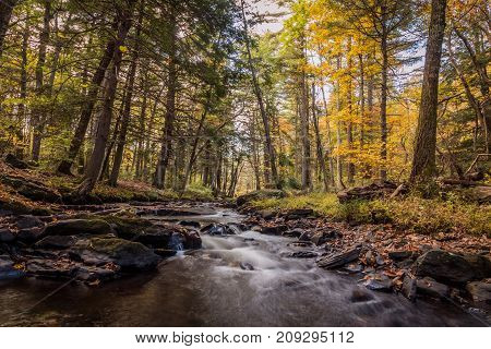 Water flows gently over rocks surrounded by brilliant foliage on tall trees