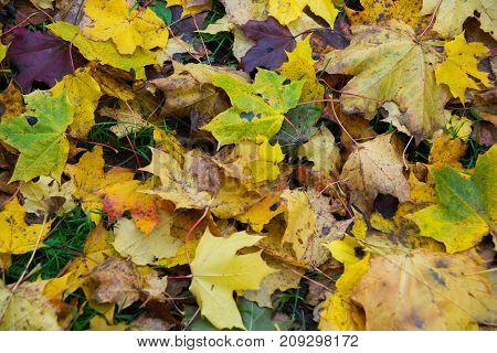 Autumn Color Change Is Season Colorful, With Red And Yellow Leaves Alternates