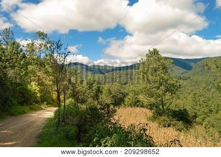 Landscape with pine trees forest in Capulalpam de Mendez in the highlands of the state of Oaxaca Mexico. It is one of the