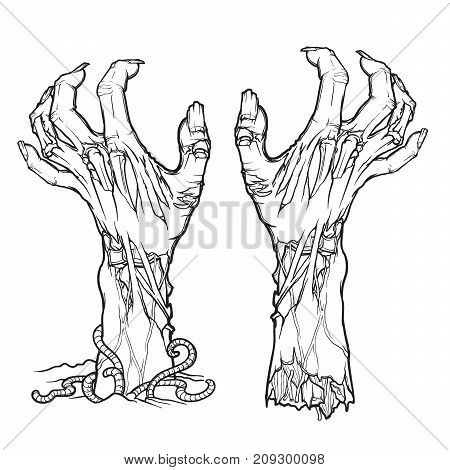 Pair of zombie hands rising from the ground and torn apart. lifelike depiction of the rotting flash with ragged skin, protruding bones and cracked nails. linear drawing isolated on white background