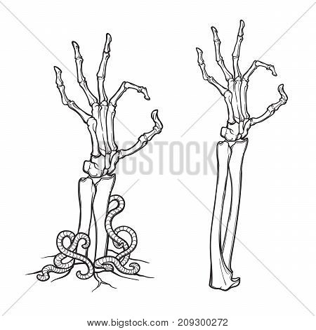 Zombie body language. OK Sign. Pair of skeleton hands rising from the ground and torn apart. linear drawing isolated on white background. EPS10 vector