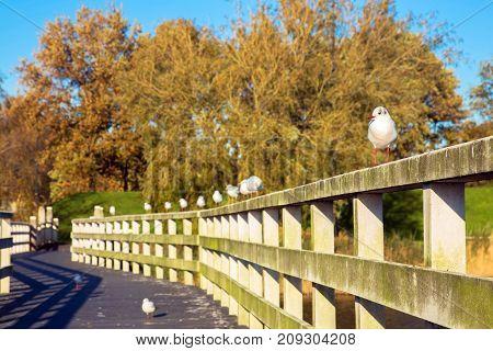 Birds are sitting on the bridge. Seagulls sit in a row on the railing of the bridge. Selective focus on the nearest seagull.