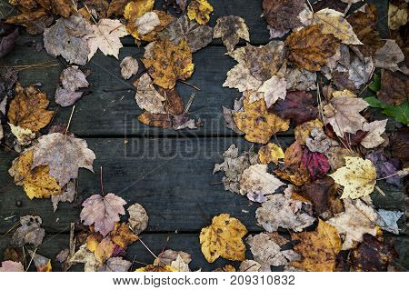 original autumn foliage in different colors on wooden floor