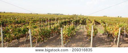 Wine Yard In Bordeaux The Best Wine In World