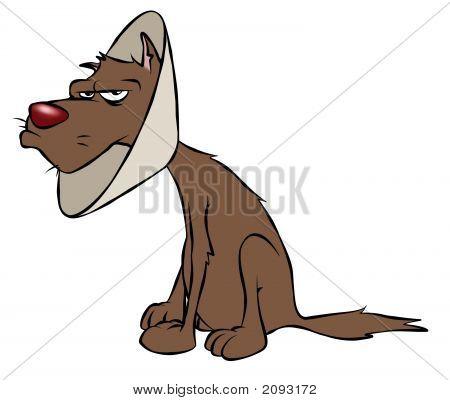 Doggy Cone