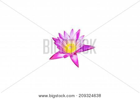 Pink lotus blossoms,Pink flower isolated on white background with clipping path