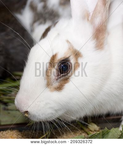 Beautiful grey rabbit in a cage. Farm