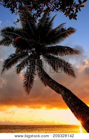 Leaning palm tree at sunrise in Lavena village on Taveuni Island Fiji. Taveuni is the third largest island in Fiji.