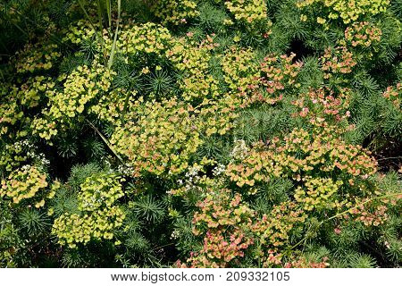 Background texture of green and yellow vegetation
