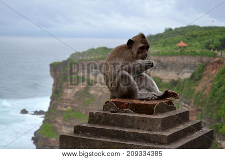 The monkey around a temple island of Bali - Indonesia. There's a lot of monkeys for sure! Pic was taken in January 2016.
