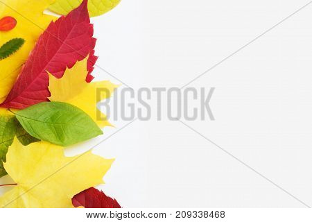 Multi-colored leaves of autumn trees on a white background