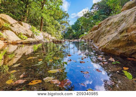 Scenic view of a tranquil stream with leaves