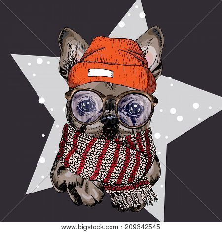 vector portrait of French bulldog dog wearing beanie glasses and scarf. Isolated on star and snow. Skecthed colored illustraion. Christmas Xmas New year. Party decoration promotion greeting card.