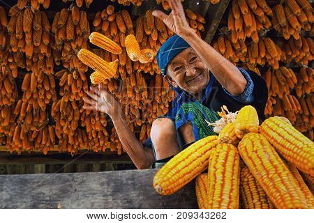 YENBAI - SEP 20 : Undefined Vietnamese Hmong Old Woman are throwing the corn in the house of corn storage on september 20 2017 at mu cang chai districtYenbai province northwest of Vietnam.