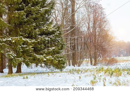 Snowfall In Early Winter, Catherine Park, Pushkin