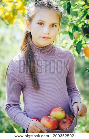 the girl collected a full hem of apples