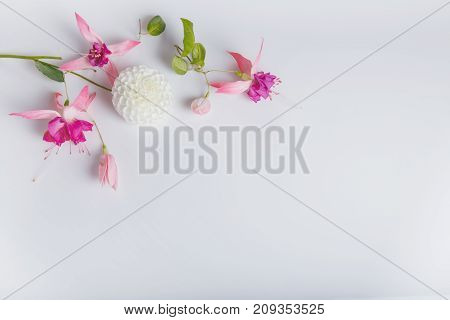 Festive flower pink fuchsia and dahlias composition on the white background. Overhead view. Copy space. Birthday, Mother's, Valentines, Women's, Wedding Day concept.