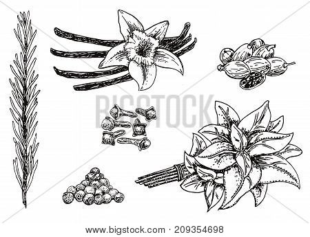 Vector ink hand drawn style set of culinary herbs and spices. Vanilla, black peppercorn, rosemary, nutmeg, cloves sketch illustration for recipe and print.