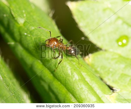 ant on green leaf in nature. close-up