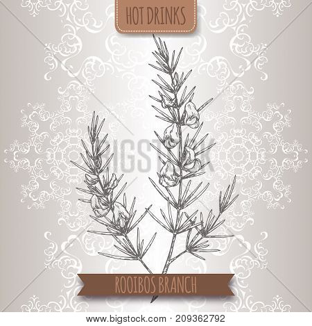Rooibos aka Aspalathus linearis branches with leaves and flowers. Hot drinks collection. Great for cafe, bars, tea ads.