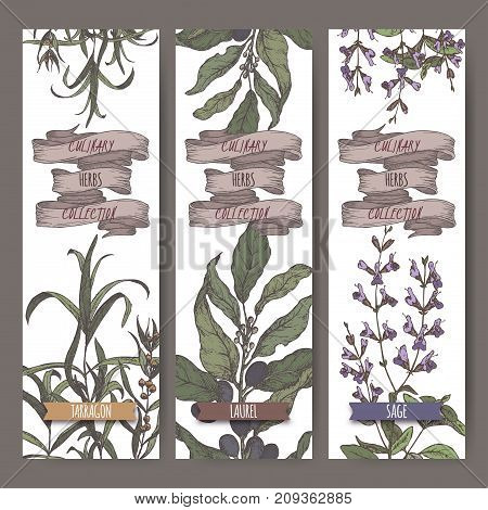 Set of three color vector banners with tarragon, sage, laurel. Culinary herbs collection. Great for cooking, medical, gardening design.