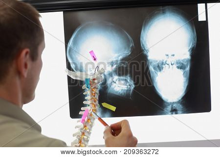 Anatomy study with spine model and x-ray of skull