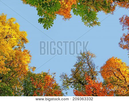 Golden treetops in autumn colorful tree canopy against the blue sky.