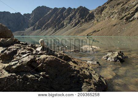 Plush Seal At The Mountain Lake