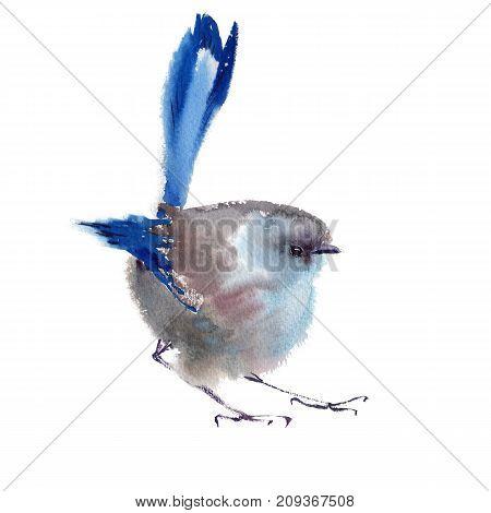 Winter fluffy soft blue bird hand drawn watercolor