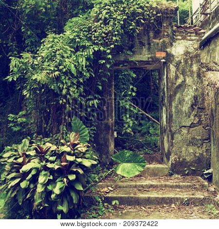 Hong Kong - October 2017: Detail of old house entrance covered in greenery.