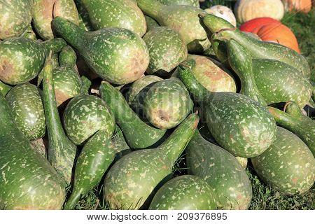 Fresh Calabash Gourd on Farmers Market in Germany