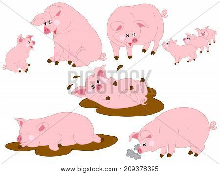 Vector set of cute cartoon pigs. Vector pig. Pigs vector illustration