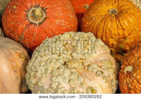 Knucklehead Pumpkins in a booth stand in Northern California.