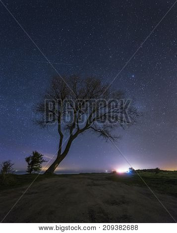 Tree Under The Starry Sky, Baltic Coast