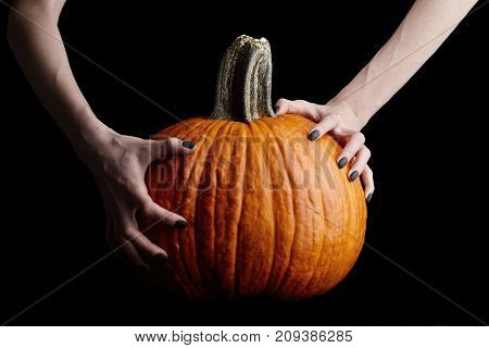 Pale bony hands with black nails holding big halloween pumpkin isolated on black background, holiday celebration
