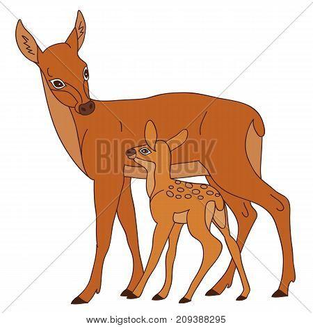 Vector cute cartoon deers. Vector deer. Deers vector illustration
