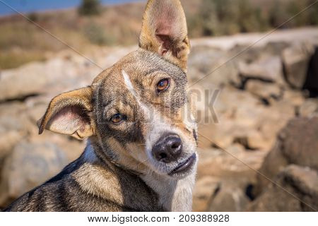 Curious dog. Lovely view of the dog. Homeless dog. Smart dog look