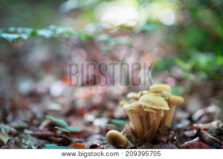 Beautiful forest landscape with mushrooms grow in stump among green moos.