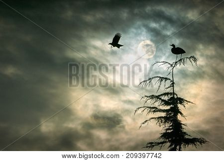 Heron and Crow. A Great Blue Heron perched on a tree and a crow at sunrise in Richmond, British Columbia, Canada.