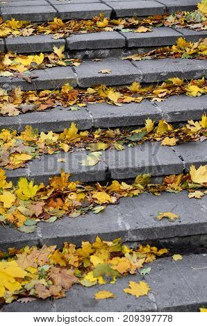 Old Concrete Steps, Strewn With A Lot Of Yellowing Fallen Autumn Leaves