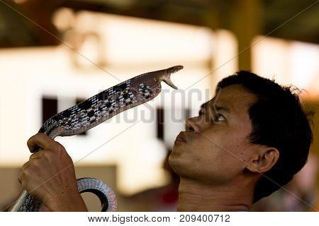 Man Kisses A Snake, Snake Farm, Phuket, Thailand, May 8, 2017