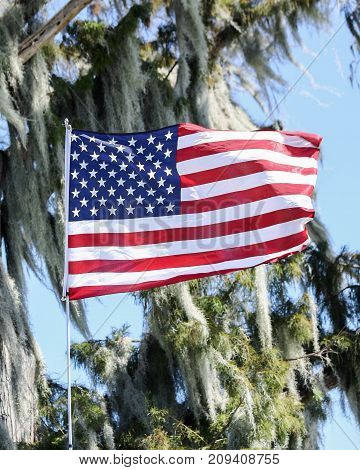 An American flag with a cypress trees in the background