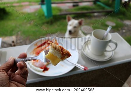 Breakfast with the waiting dog in the morning