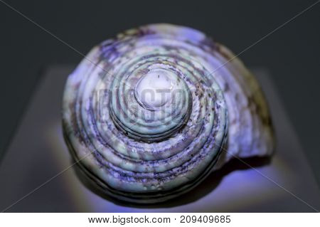 spiral, cone, sea tropical shell on white background