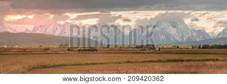 panoramic sunrise of Wyoming ranch with the Grand Teton on the background during sunrise