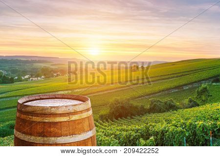 Champagne vineyards with old wooden barrel on row vine green grape in champagne vineyards background at montagne de reims France