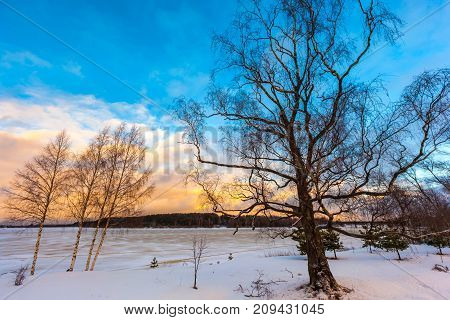 A branchy tree on the coast of Volga river at sunset. Winter in Russia.