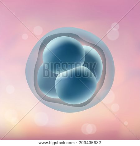 In vitro fertilization IVF. Embrio development. 4-stage cell. Illustration for web or typography magazine, brochure, flyer, poster. Blurred pink background