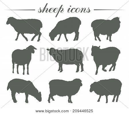 animal husbandry. breeding of sheep. set of vector silhouettes on white background