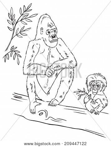 hand drawing on white background family gorilla sitting on a tree branch